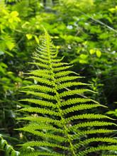 A Bright Green Fern Leaf Outli...