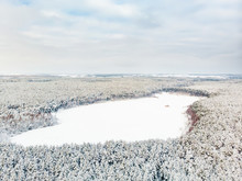 Beautiful Aerial View Of Snow Covered Pine Forests Aroung Gela Lake. Rime Ice And Hoar Frost Covering Trees. Scenic Landscape Near Vilnius, Lithuania.