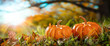 canvas print picture - Thanksgiving - Two Mini Pumpkins In Grass With Tree And Sunset Background