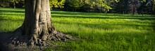 Panoramic Of A Tree On A Grassy Field With A Blurred Background At Daytime