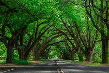 Tree Lined Road In Aiken