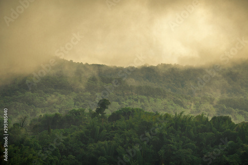 Foto op Aluminium Khaki The high mountain panorama nature background, the color of the light changes according to the climate, the wind and the blurred coolness of the mist blowing through, the integrity of the forest