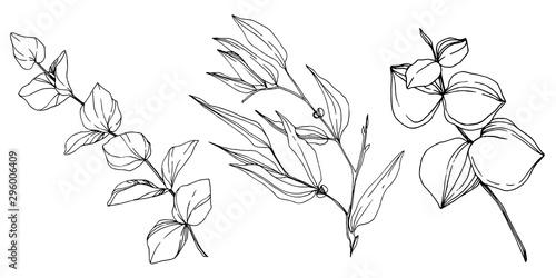 Valokuvatapetti Vector Eucalyptus tree leaves