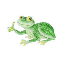 Green Frog Isolated On A White...