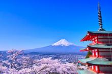 春の桜咲く新倉山浅間...