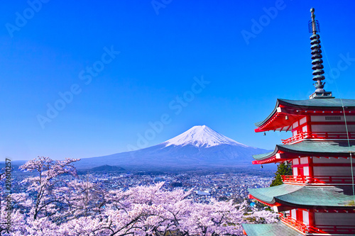 Fototapeta 春の桜咲く新倉山浅間公園内の五重塔と富士山