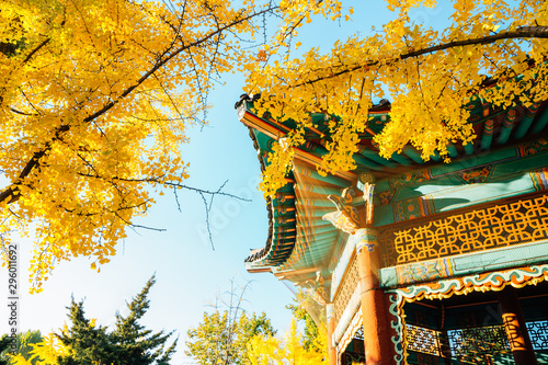 Montage in der Fensternische Honig Korean traditional pavilion with autumn ginkgo trees at Children's Grand Park in Seoul, Korea