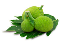 Breadfruit (known As Bread Nut,  Artocarpus Altillis) With Green Leaf  Isolated On White Background. Properties As Sake,prevention Of Memory Loss Or Alzheimer. Medical Plant Concept. Clipping Path.