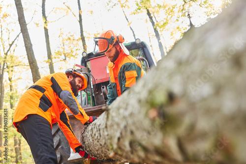 Fotografie, Obraz  Zwei Waldarbeiter transportieren einen Baumstamm
