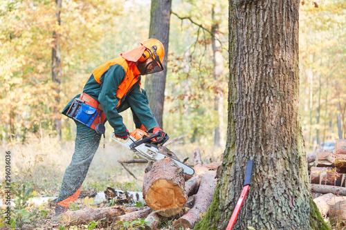 Aluminium Prints Akt Waldarbeiter in Schutzausrüstung sägt Baumstamm