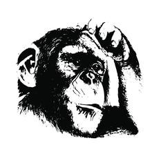 Hand Drawn Monkey. Natural Co...