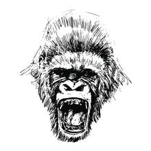 Hand Drawn Monkey. Natural Col...