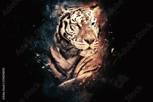 tiger-portrait-on-black-background