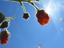 Orange Bush Field Flower