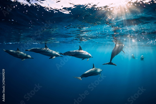 Photo  Spinner dolphins underwater in blue ocean. Dolphin family