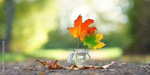 Foto auf Gartenposter Khaki bunt gefärbte Herbst Blätter