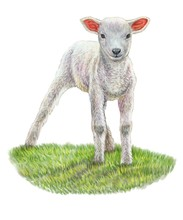 Little Lamb. Illustration, Art...