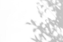 Overlay Effect For Photo. Gray Shadow Of The Leaves On A White Wall. Abstract Neutral Nature Concept Blurred Background. Space For Text.