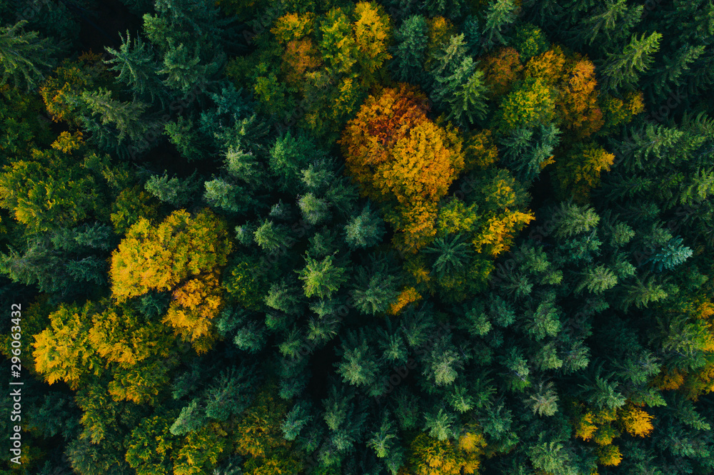 Fototapety, obrazy: Aerial view of autumn tree tops.