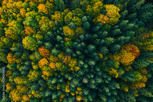 Arbre Aerial view of autumn tree tops.