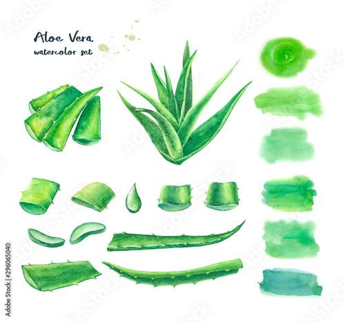 Fotografiet Set of watercolor aloe vera elements