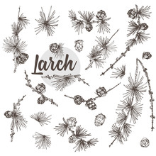 Set Ink Hand Drawn Sketch Of Larch Branches With Pinecones Isolated On White Background Good Idea For Vintage Merry Christmas Card, New Year Conifer Tree Pattern Or Decorative Design.