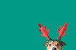 Leinwanddruck Bild - New year and Christmas concept with Dog wearing reindeer antlers headband against solid green background