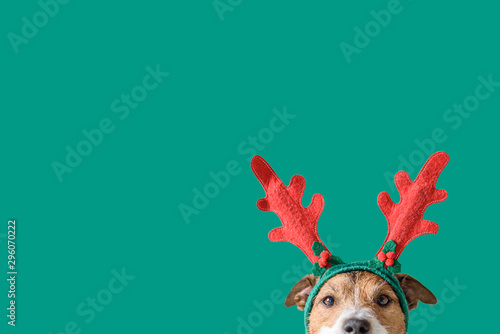 Fotografía  New year and Christmas concept with Dog wearing reindeer antlers headband agains