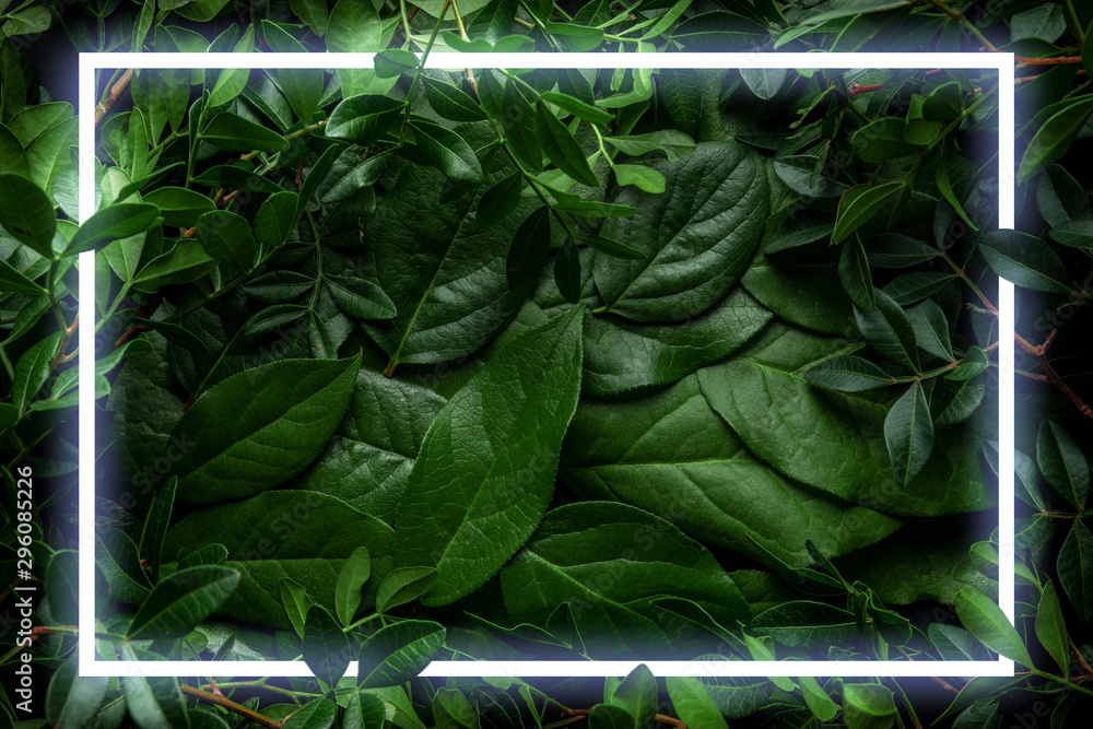 Fototapety, obrazy: Creative layout made of leaves and branches with neon frame. Minimal nature concept. Flat lay.
