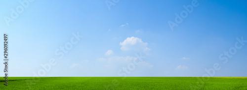 Fototapeta sky and green field background panorama obraz