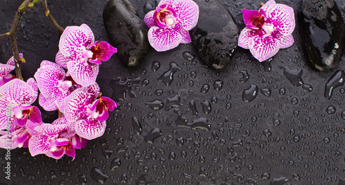 Orchidée Wet black background with orchid flowers and wet zen massage stones