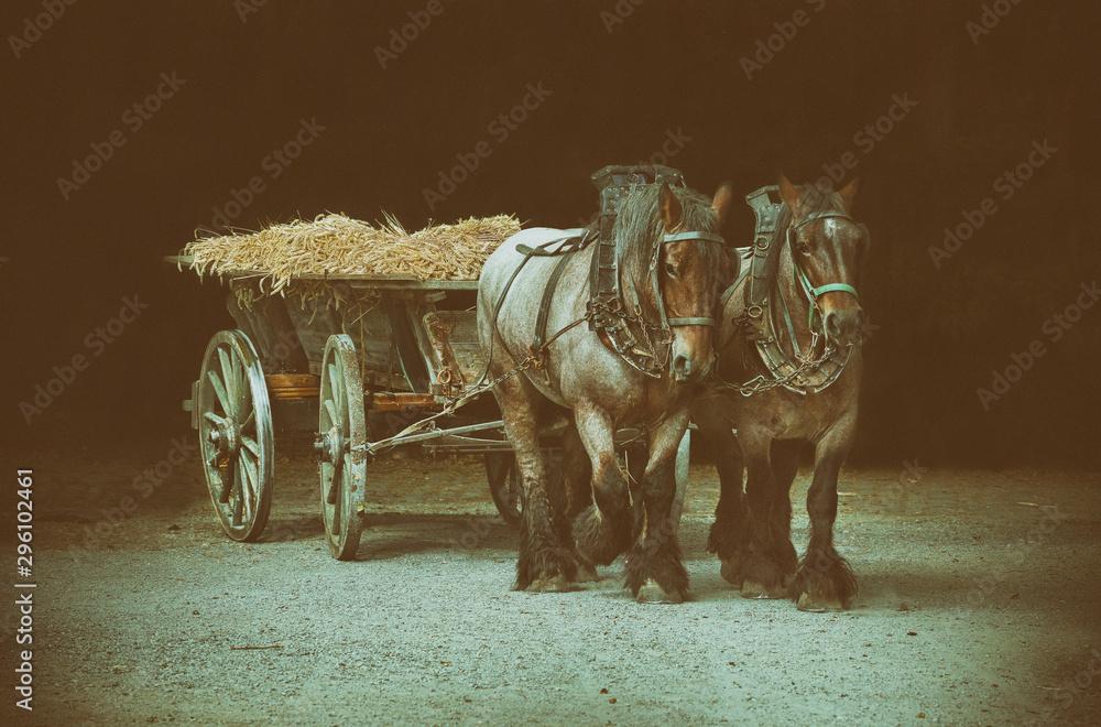 Fototapeta zwei Pferde bei der Ernte