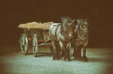Zwei Pferde Bei Der Ernte