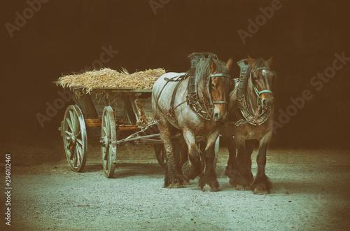 zwei Pferde bei der Ernte Canvas Print