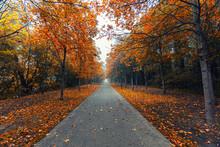 Autumn Tree Alley