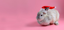 Brown Bunny Wear Red Santa Cla...