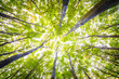 canvas print picture - Die Sonne scheint in den Buchenwald im Herbst