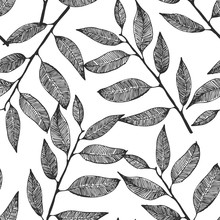 Seamless Vector Background With Hand Drawn Leaves, Eucalyptus Pattern