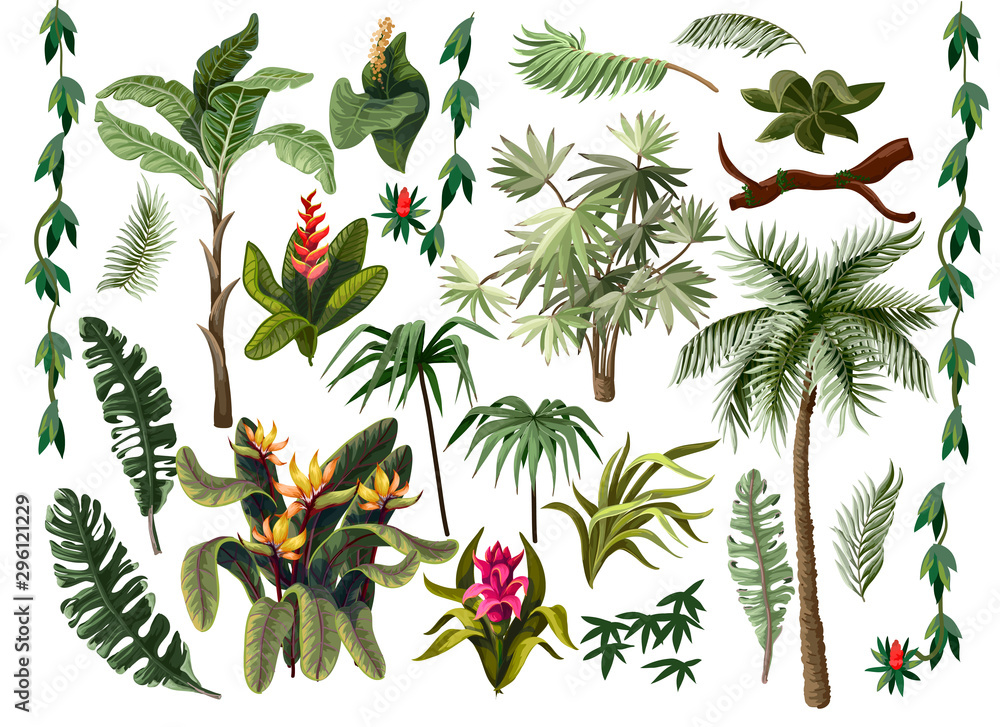 Fototapety, obrazy: jungle trees and flowers isolated. Vector.