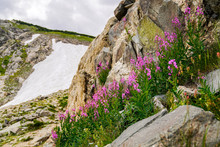 Colorado Wildlfower