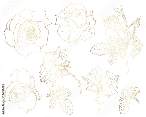 Montage in der Fensternische Künstlich Sketch Floral Botany Collection. Golden roses flower, leaves and buds drawings. Line art on white backgrounds. Hand Drawn Botanical Illustrations.