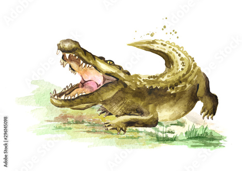 Wild attacker forward crocodile or Alligator with open mouth Canvas Print