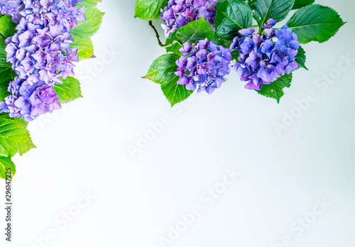 Beautiful, vintage style flora background with hydrangea or hortensia bloosom in the garden
