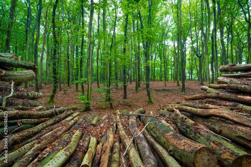 Aluminium Prints Green Holz im Wald - Herbst