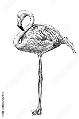 flaming-recznie-rysowane-artystyczny-czarno-bialy-szkic-flamingo-ptaka-na-bialym-tle