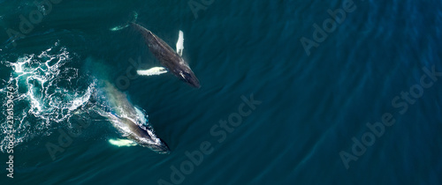 Obraz Aerial view of huge humpback whale, Iceland, Europe. - fototapety do salonu