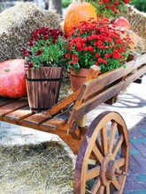 Old Wooden Cart With Flowers A...
