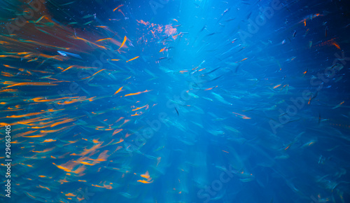 Fotomural  Deep blue on water illuminated by light shing above attracting schools of small