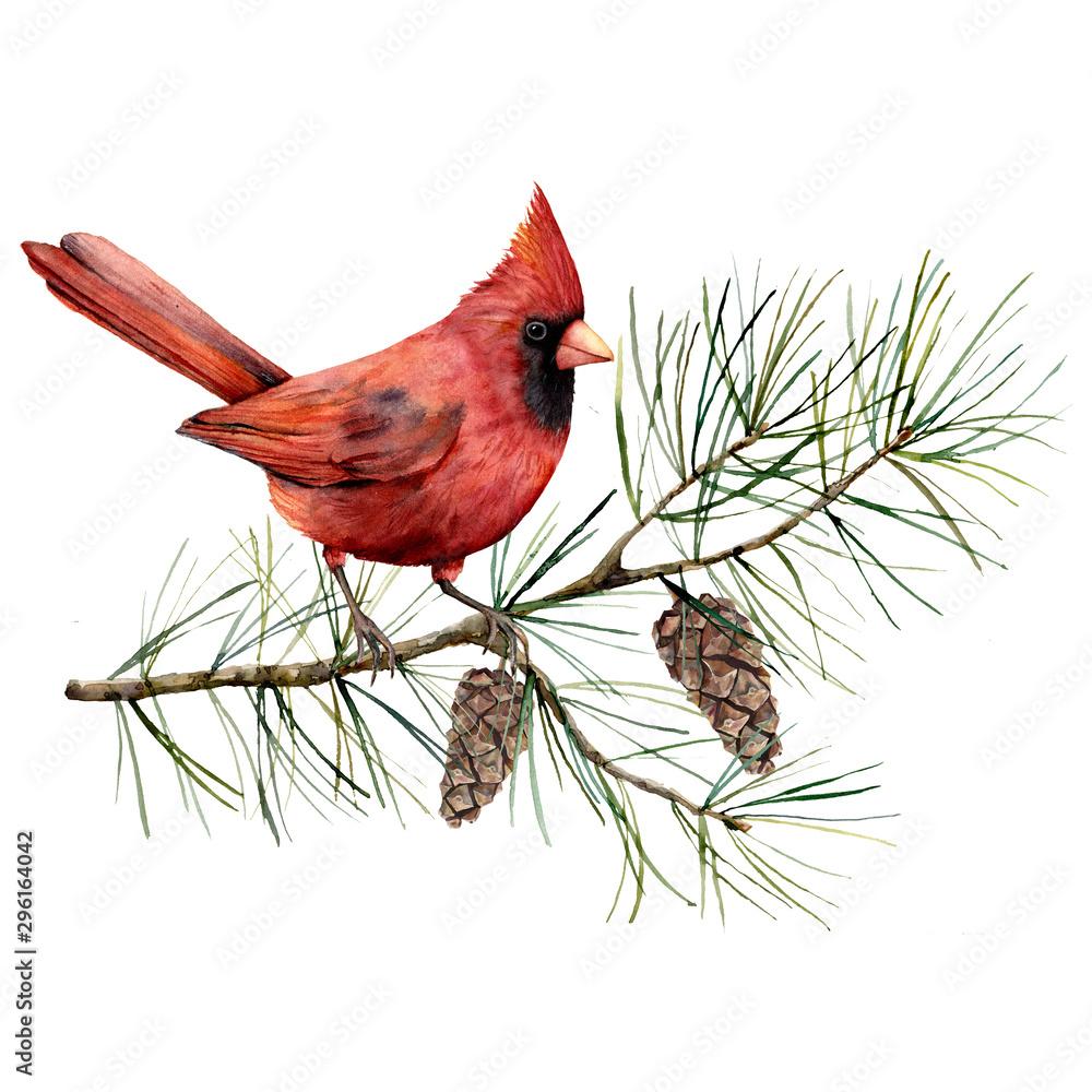 Akwarela świąteczna kompozycja z kardynałem ptaka. Ręcznie malowane zimowe karty z ptakiem, gałąź jodły i szyszki na białym tle. Kwiatowa ilustracja do projektowania, drukowania, tkaniny lub tła. <span>plik: #296164042 | autor: yuliya_derbisheva</span>