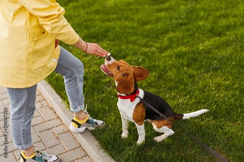 Fotografía  Dog smelling hand of owner in park